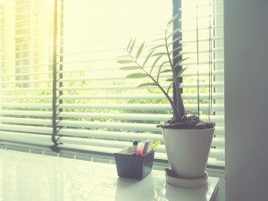 small plant on white desk beside window