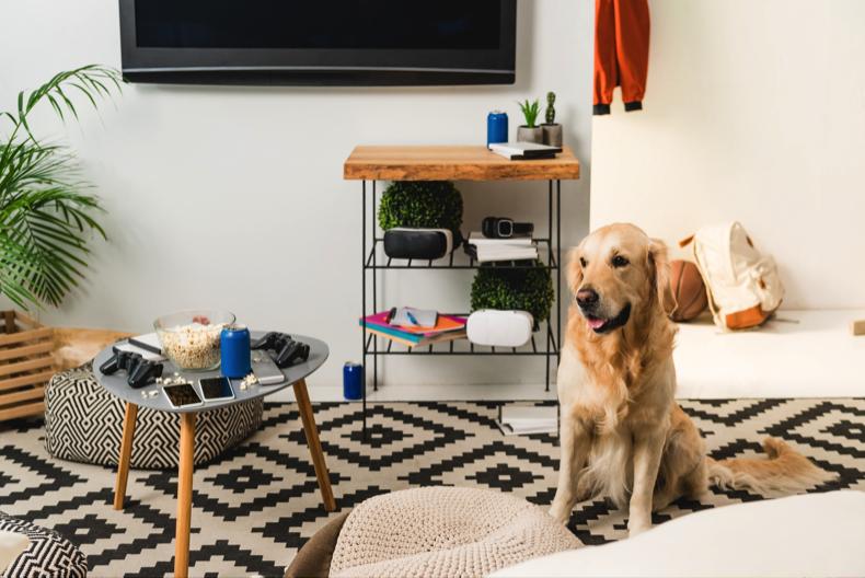 3 claves para decorar tu casa con mascotas mobelpark for Muebles juveniles asturias